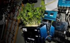 Produire de la nourriture dans l'espace : c'est pour demain ?